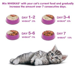 cat food whiskas feeding