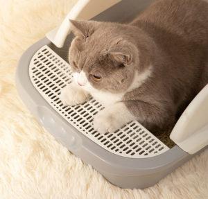 cat sand filter