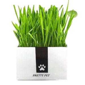 Cat-Grass