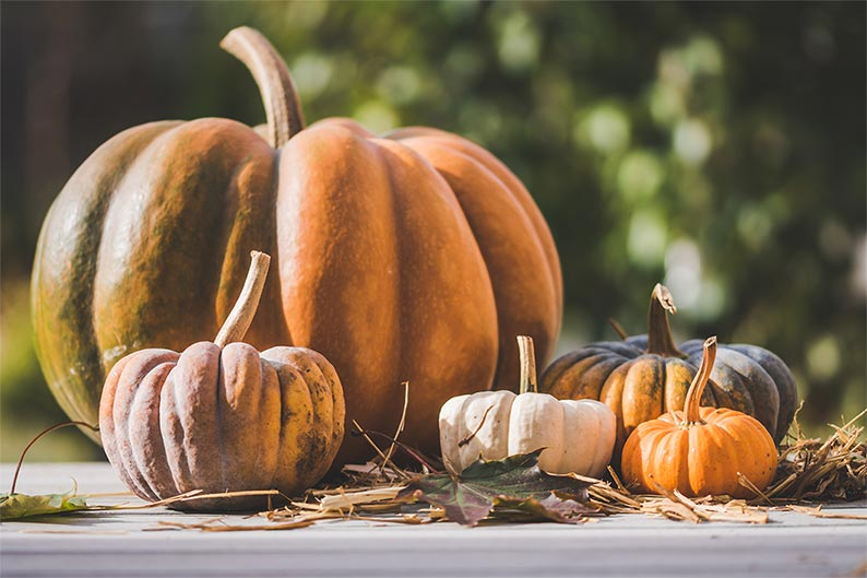 pumpkin for hairball